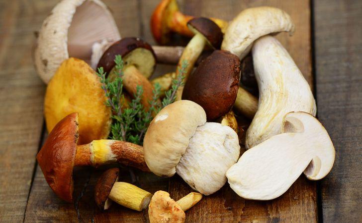 http://metllasse.com/column/healthcare/_d-functional-mushroom/image.